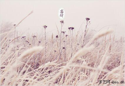 霜降是秋季的最后一个节气,是秋季到冬季的过渡节气。秋晚地面上散热很多,温度骤然下降到0度以下,空气中的水蒸气在地面或植物上直接凝结形成细微的冰针,有的成为六角形的霜花,色白且结构疏松。 这个时候南方正是三秋大忙季节,单季杂交稻、晚稻才在收割,种早茬麦,栽早茬油菜;摘棉花,拔除棉秸,耕翻整地。