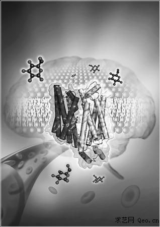 葡萄糖转运蛋白晶体结构成功
